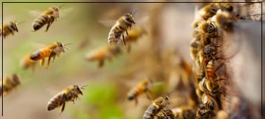 actu-abeilles.png