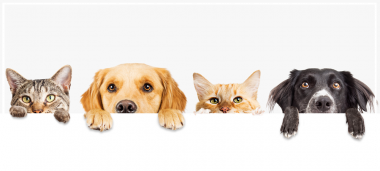 actu-chiens-chats.png