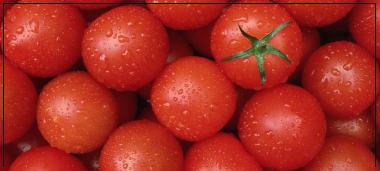 actu-tomates.png
