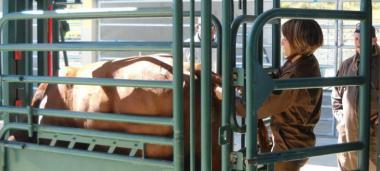 Le texte définit aussi les règles de fonctionnement des établissements de soins vétérinaires et les conditions d'exercice de certains actes vétérinaires par les éleveurs et les techniciens d'élevage (© SIVAP).