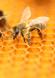 c-abeilles2.png