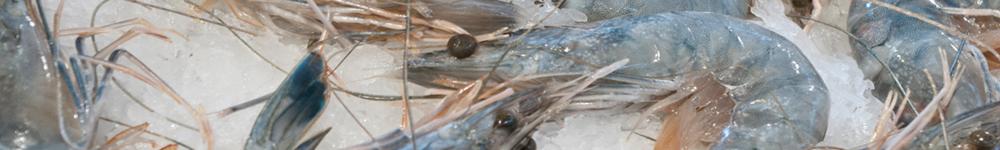 et_export-crevettes.png