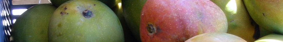 et_fruits.png