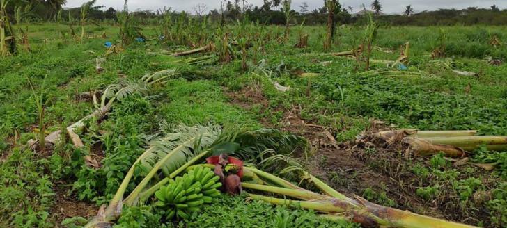Les communes du Nord ont été particulièrement touchées. Comme sur cette image, à Ouégoa, où les plantations de bananes ont été endommagées.