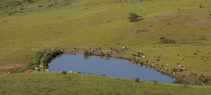 Créée par les élus du Congrès le 3 juillet, l'Agence rurale sera physiquement installée à Ducos dans les anciens locaux de l'Erpa.