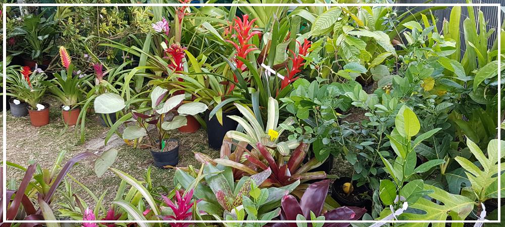 actu-horticulture.png