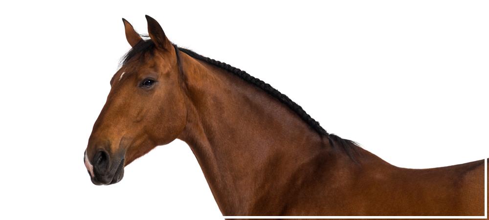 actu-imp-chevaux.png
